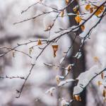 Wednesday – Change It – Reset Nature